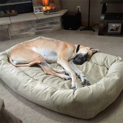 Extra Large Dog Beds By Mammoth Lifetime Warranty