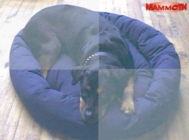Mammoth Donut Dog Beds