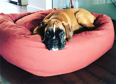 mammoth large dog bed - Dog Beds For Large Dogs