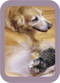 dog nursing kitten