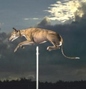World's highest dog jump