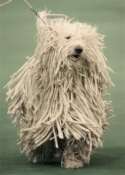 131st Westminster Dog Show