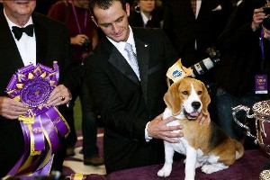 13th Westminister Dog Show