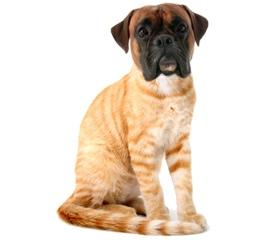 dog cat hybrid