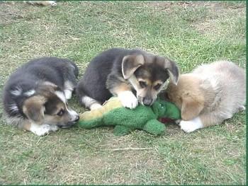 dogattacksgator.JPG