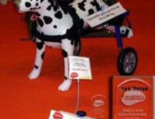 Best Innovation for Animal Health Product