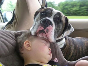 dog on kids head