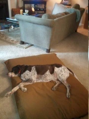 XXL Super Mat Pet Bed
