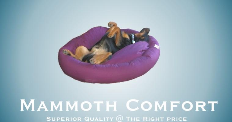 mammoth dog bed XL