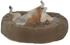 Easy maintenance with removable covers on the pillow and bolster. Excellent sheen and durability. Dog bed furniture at it's best. Get it today from Mammoth outlet. Get the Memory Foam Oblong Dog Bed today. Mammoth dog bed- the only choice for quality.