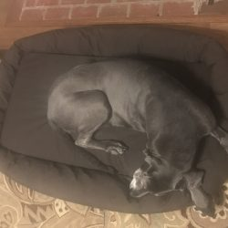 Great Dane On Dog Bed