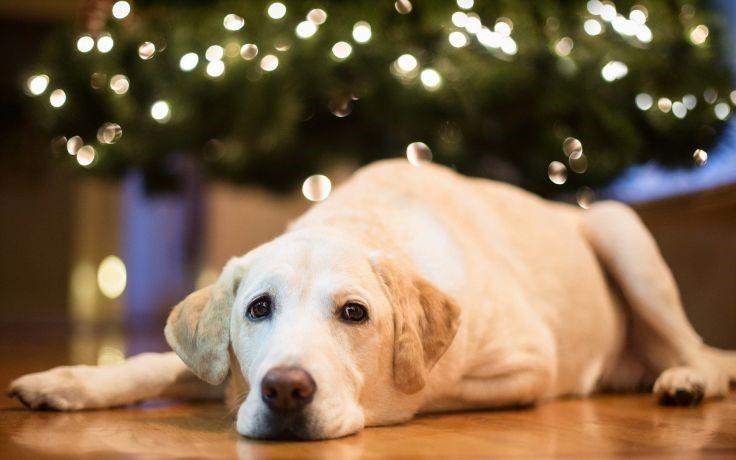this-season-give-the-gift-image