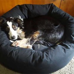 dog-on-mammoth-dog-bed