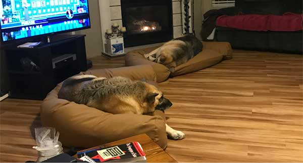 dogs-on-couches-1.jpg