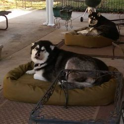 outdoor-mammoth-dog-bed-two-ddogs