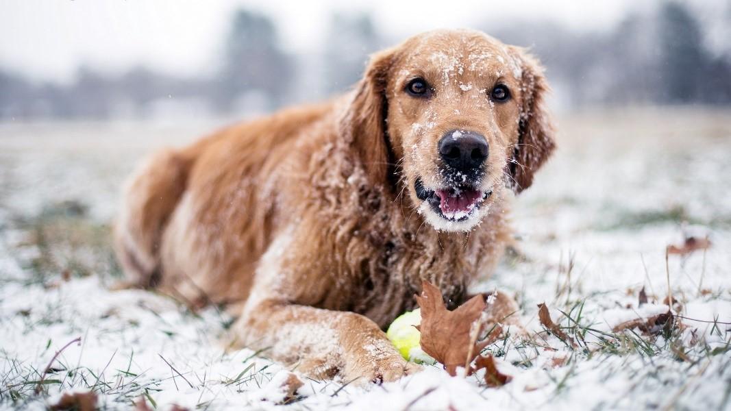 Making Winter Cozier - Image