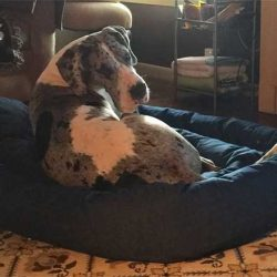 Mammoth Outlet Dog Bed Reviews