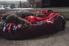 poodle-on-xl-dog-bed