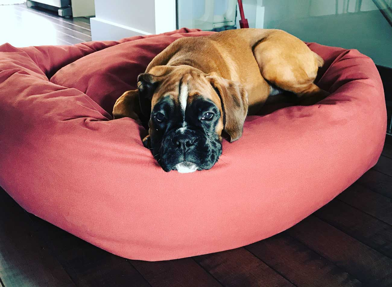 Large Dog Beds For Large Dogs By Mammoth Beds