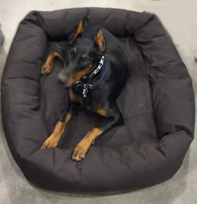 tufted dog bed