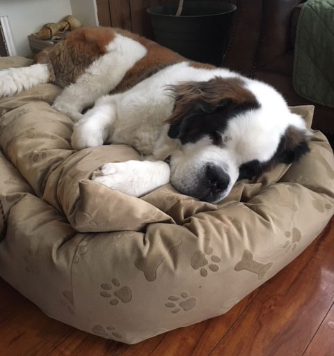 Extra Large Dog Bed By Mammoth