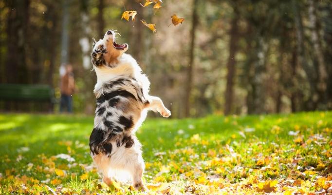 dog jumping on grass