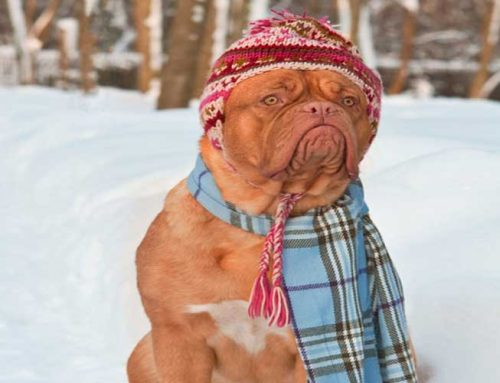 Learn About Must-Have Dog-Items for the Cold Winter Months