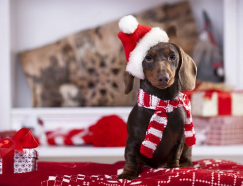 Read These Tips for How to Enjoy the Holidays with Your Pet