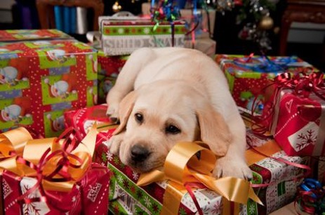dog on gifts