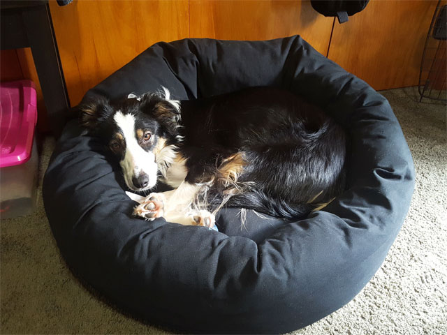 Large donut dog bed Mammoth