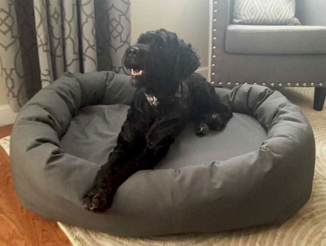 Mammoth Memory Foam Dog Beds