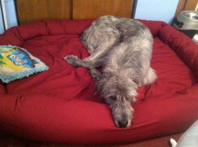 Irish Wolf Hound Dog Bed