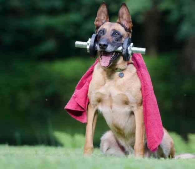 shepherd superhero