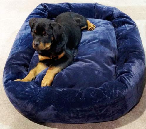 rottweiler puppy on dog bed